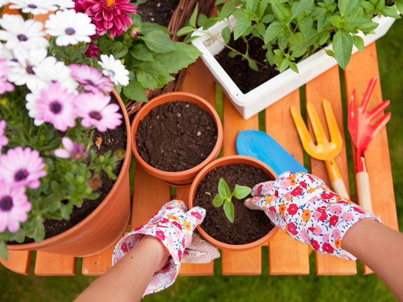 jardiner avec votre enfant. Black Bedroom Furniture Sets. Home Design Ideas